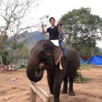 ルアンパバーン(ラオス)で象使いの資格を最安値で取る方法!